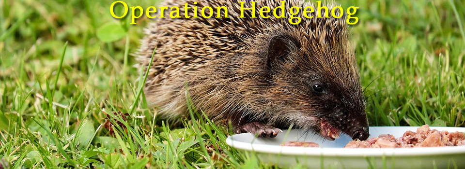 Operation Hedgehog